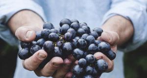 Apports nutritifs dans déshydratation alimentaire