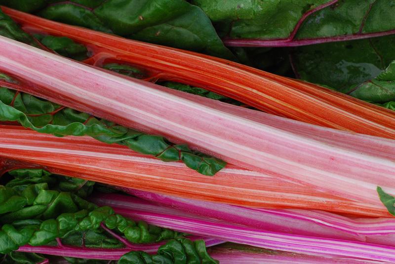 Faire un cuir de fruit avec de la rhubarbe
