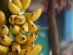 Déshydrater des bananes