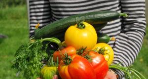Déshydrater les légumes du potager